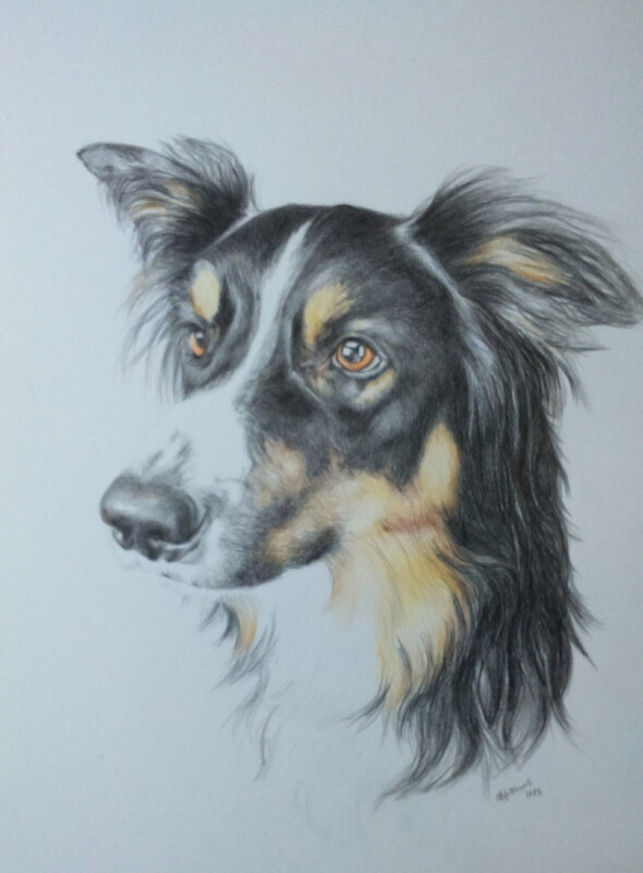 dog drawing commission