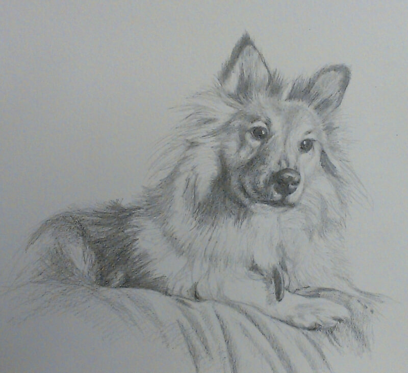dog pencil drawing commission