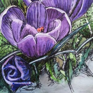 watercolour pencil online workshop